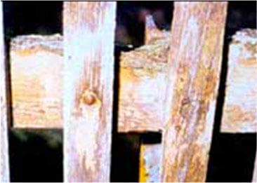 Drevo napadnuté drevokaznými hubami